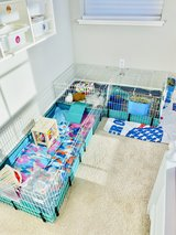 Guinea Pigs in Fairfield, California