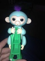 Fingerlings Monkey in Chicago, Illinois