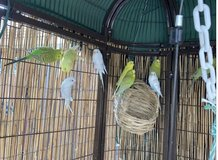 Parakeets are Sold in Fairfield, California