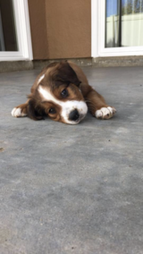 ISO family who sold us our dog in January 2018 in Camp Pendleton, California