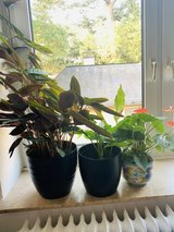 Plants need a new home in Wiesbaden, GE