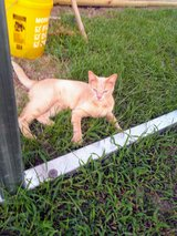FREE CAT TO GOOD HOME in Cleveland, Texas