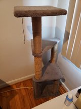 Cat trees in Fort Knox, Kentucky