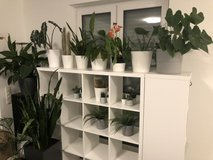 Free House Plants and Flower Pots in Ramstein, Germany
