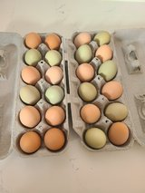 Fresh eggs in Alamogordo, New Mexico