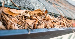 Need your gutters cleared? Leaf clean-up and debris removal, FREE estimates in Kingwood, Texas
