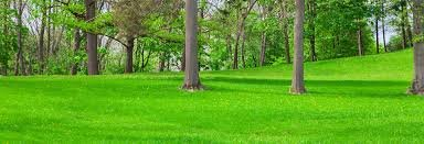 Free estimates for lawn maintenance and outdoor beautification for your home or business in Spring, Texas