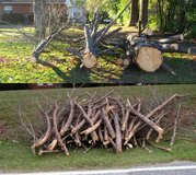Cypress Limbs 6 to 8 ft. Long FREE - Firewood or Crafts in Warner Robins, Georgia