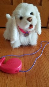 Go Go My Walking Pup in Plainfield, Illinois
