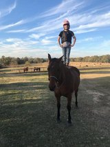 Ranch Horse in Livingston, Texas