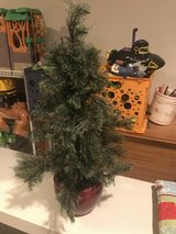 Small Fake Pine in Joliet, Illinois