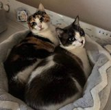 2 FREE CATS in Travis AFB, California