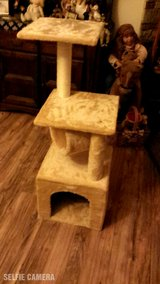 New Cat Tree in Yucca Valley, California