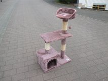 cat tree, pretty color in Ramstein, Germany