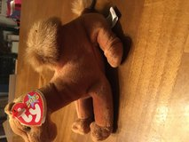 Camel toy beanie baby year 2000 in Ramstein, Germany