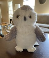 Gray & White Owl in Naperville, Illinois