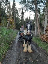 Carriage ride in Spangdahlem, Germany
