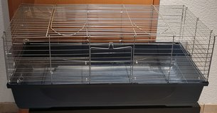 Rabbit, Guinea Pig, small pet cage in Ramstein, Germany