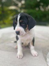 7 week old in Fort Campbell, Kentucky