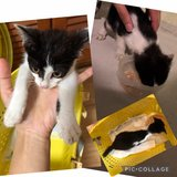 Need Foster/Forever Home in Okinawa, Japan