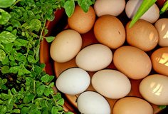 Egg Cartons Needed ISO in Camp Lejeune, North Carolina