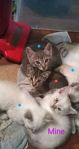 rehoming kittens in 29 Palms, California