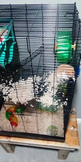 Hamster with extra large cage and supplies in Fort Campbell, Kentucky