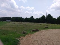 Square Hay Bales For Sale in Rolla, Missouri