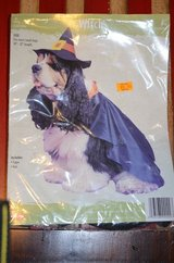 """"""" Witch"""" pet costume in Fort Campbell, Kentucky"""