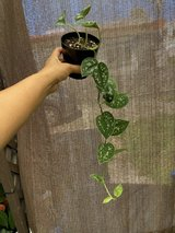 Small house plants lot in Okinawa, Japan