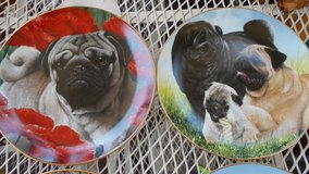 4 pug wall hanging plates in Alamogordo, New Mexico