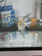 free fish in Ramstein, Germany