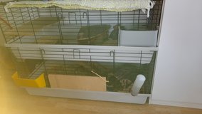 Guinea Pig with Cage in Stuttgart, GE