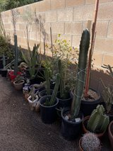 cactus for sale / Open -Sun ,Tue , Friday in 29 Palms, California