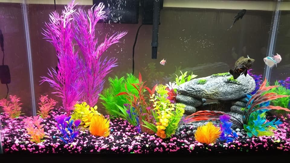 Fish Tank And Accessories Pets Supplies For Sale On Robins Bookoo