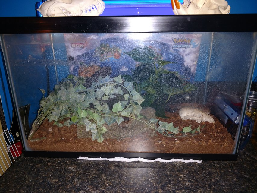 Emperor Scorpions And Setup Pets For Sale On Robins Bookoo