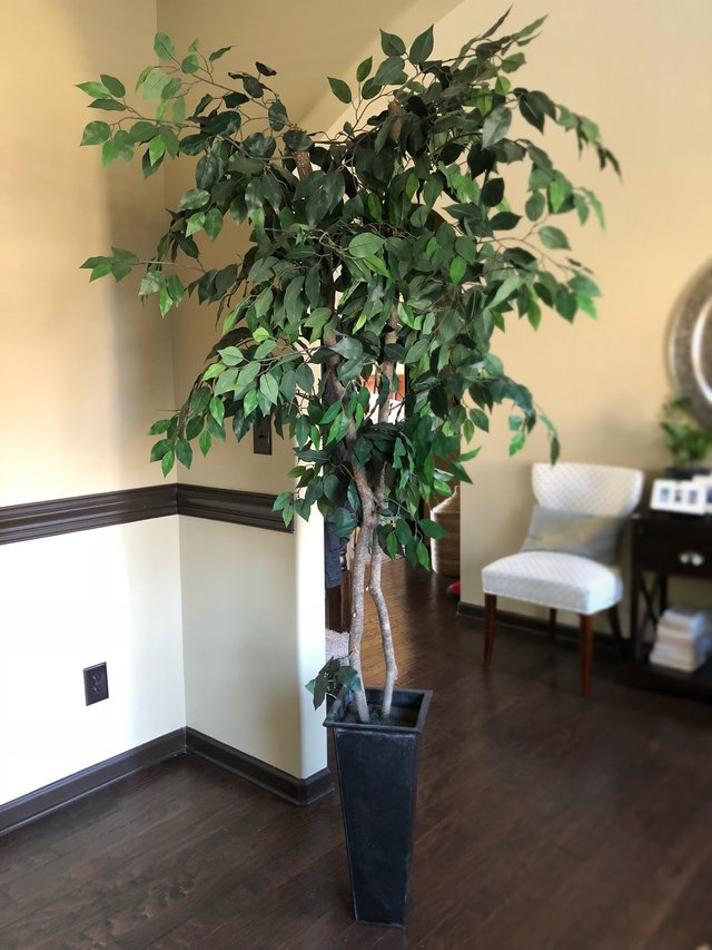 Ficus Tree Artificial Home Decor For Sale On Fort Campbell Bookoo